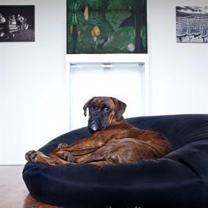 Hund_p_BautaPuck